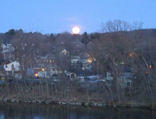 Winter Crow Roost: full moon