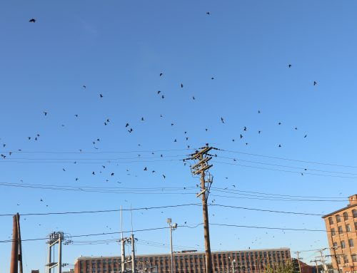 Crows: barrel roll flight action!