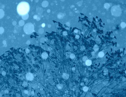 Crow Patrol: in the snowstorm!
