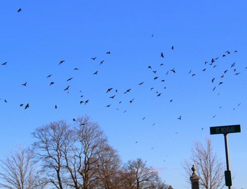 Crow Patrol: staging at IC Cemetery