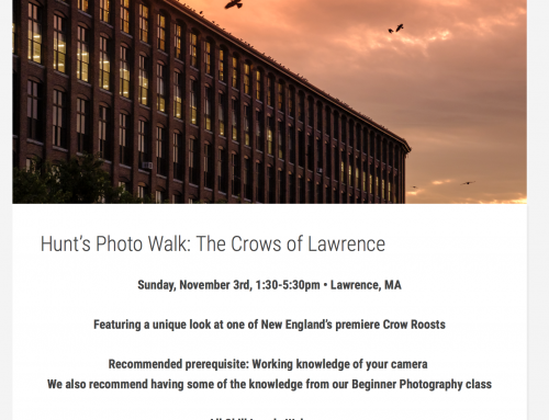 Hunt's Photo Walk: Lawrence Crow Roost!