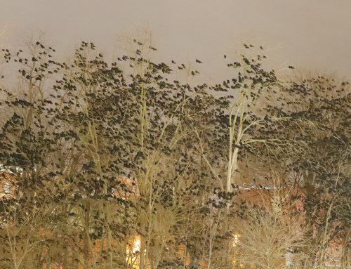 Crow Roost road trip: Cornell U., Auburn, NY, Hamilton College!