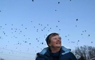 thousands of crows descend on Lawrence