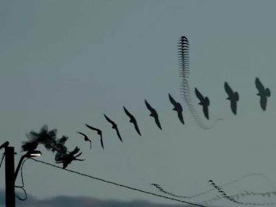 Crows and Two Lights video by Dennis Hlynsky