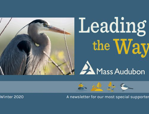 MassAudubon: Crows Connecting a Community