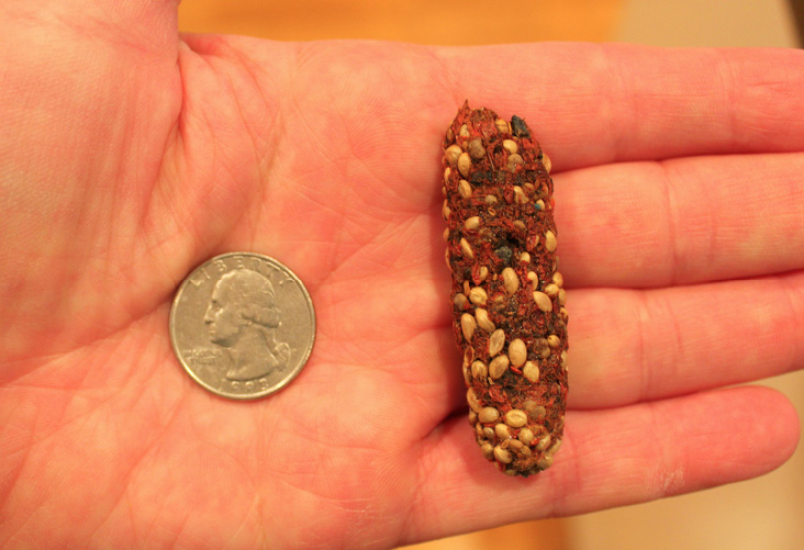Crow pellet found at the Lawrence Winter Roost
