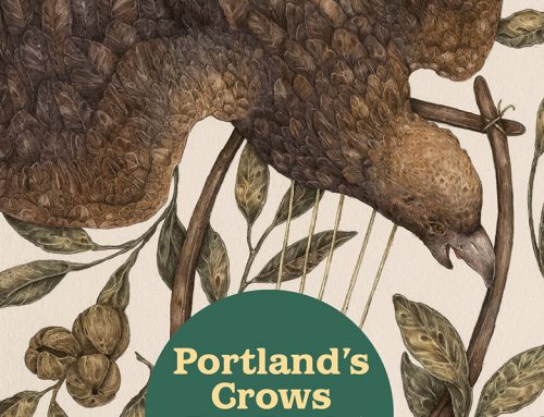 Portland's Crows Are Back. So Are the Laser-Guided Hawks That Scare Them Off.